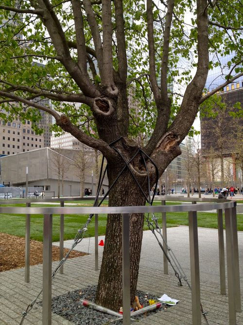 The-Survivor-Tree-at-WTC-Memorial